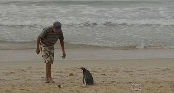 救命之恩永生难忘 企鹅游5000英里看望老人 八