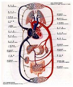 人体循环系统简述 生之道 百家谈 健康促进计划