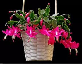 我想找养花方面的知识