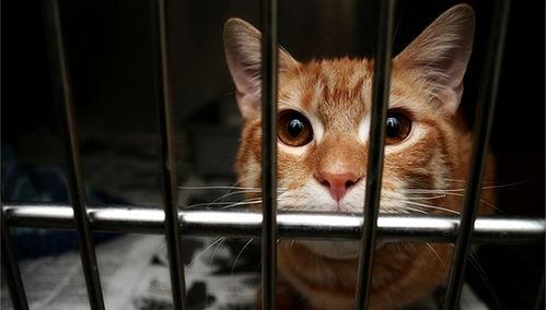 法治面立法规制虐待动物,地方可先行探索或专门制定伴侣动物保护法