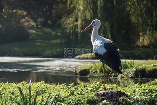 鹳性质鸟动物世界羽毛动物优雅候鸟图片素材免费下载1素材大全高清图片