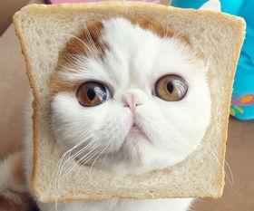 猫咪的生日数学题小学