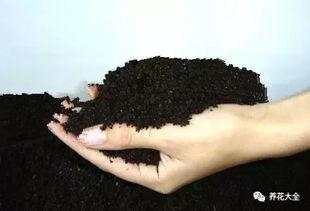 炭渣可以养花