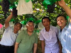 时代楷模赵亚夫在田间指导葡萄生产。