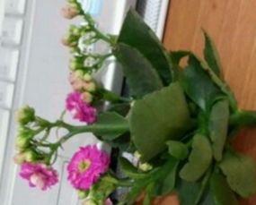 花瓶养花要经常换水吗