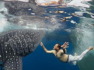 鲸鲨,新几内亚