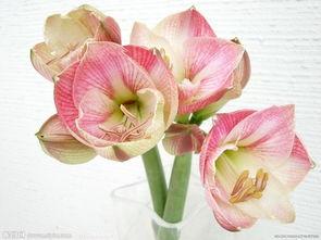 鲜花插花图片