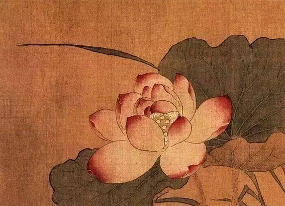 关于芙蓉的诗句