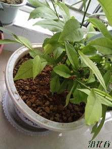 养花肥料怎么放