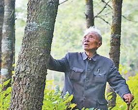 云南省原保山地委书记杨善洲辛勤耕耘荒山披绿