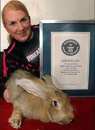 全球体积最大兔离奇去世
