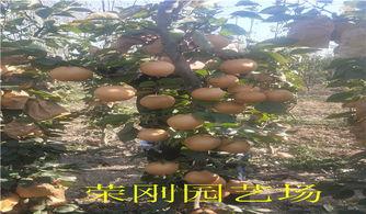 香梨炒玉米粒