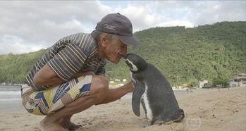 救命之恩永生难忘 企鹅游5000英里看望老人 组图