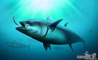 金枪鱼价格现在多少钱一斤,金枪鱼为什么会如此之贵