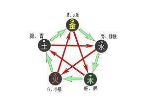 生辰八字里的五行是什么意思(算卦中的命里五行,金、木、水、火、土