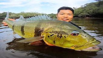 亚马孙河可以钓鱼吗