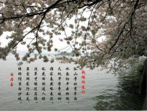 描写四季的风景的词语_描写四季景色的4字词语