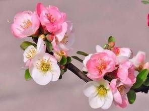 算卦中的十朵桃花
