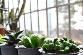 室内养花排水