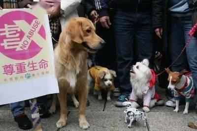反家暴法已经实施,反虐待动物法,你在哪儿