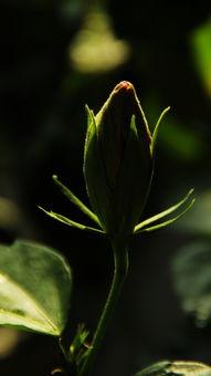 自简单养花朵