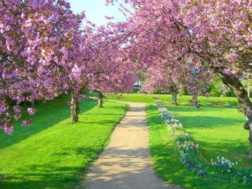 关于春天长安的诗句