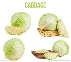 唯美圆白菜图片