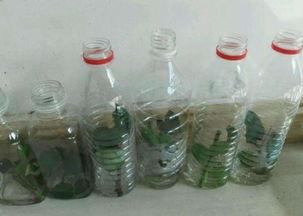 如何利用矿泉水瓶养花