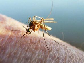 形容蚊子咬人的句子