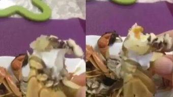 蟹黄致癌 螃蟹打针 七大谣言你信过多少