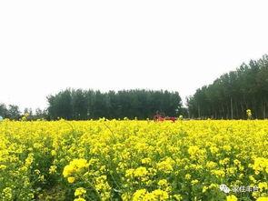 中国都市农业园有哪些村