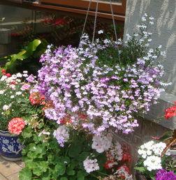 """热衷""""断舍离""""的闺蜜,在阳台上种了一盆此花,引来了邻居的询问  春天的田野真美丽"""