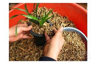 锯沫养花用不用发酵
