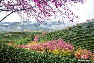 陕西韩城700年古村春节游客品味传统