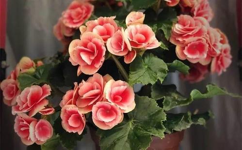 冰箱上能养花吗