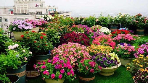 楼顶上可以多养花吗