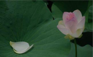 关于绿色盆栽的诗句