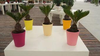 塑料水管花盆养花工艺