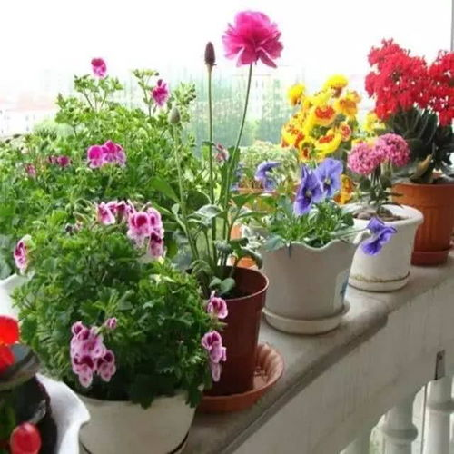 养花与肺炎