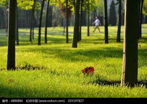 公园小树林的绿地高清图片下载 编号4886884 红动网