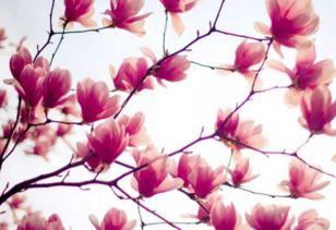 与花有关的诗句桃花