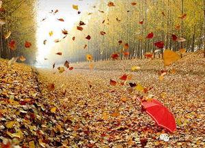 有关秋风落叶的诗词