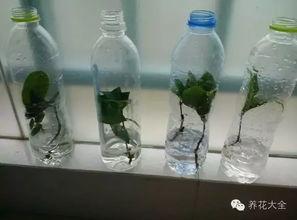 矿泉水瓶养花创意