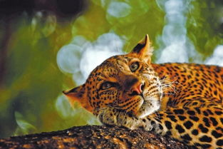 万物熙攘第54届全球野生动物摄影展