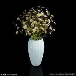 雏菊养花瓶