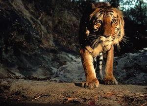 野生物贸易项目