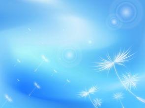 天蓝色渐变光圈交错叠加气泡随风吹蒲公英图