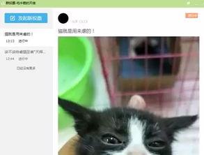 """事实上,在""""大天使长""""上传的短视频中,除了虐猫,还有虐狗。"""