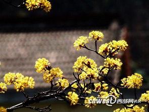 春暖花开 陕西最美的十大赏花地